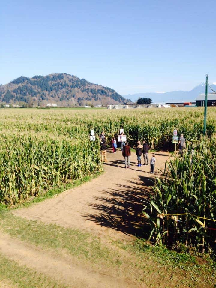 Chilliwack Corn Maze Facebook