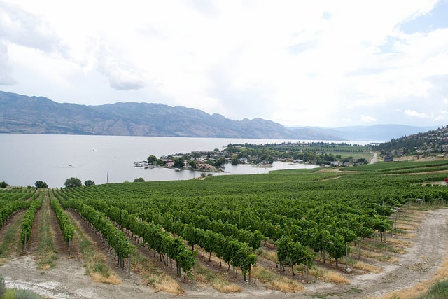 West Kelowna Wineries: A Self-Guided Winery Tour!