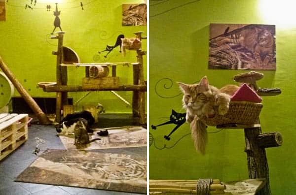 Visiting the Cat Café Budapest. Lots of snuggles all around!