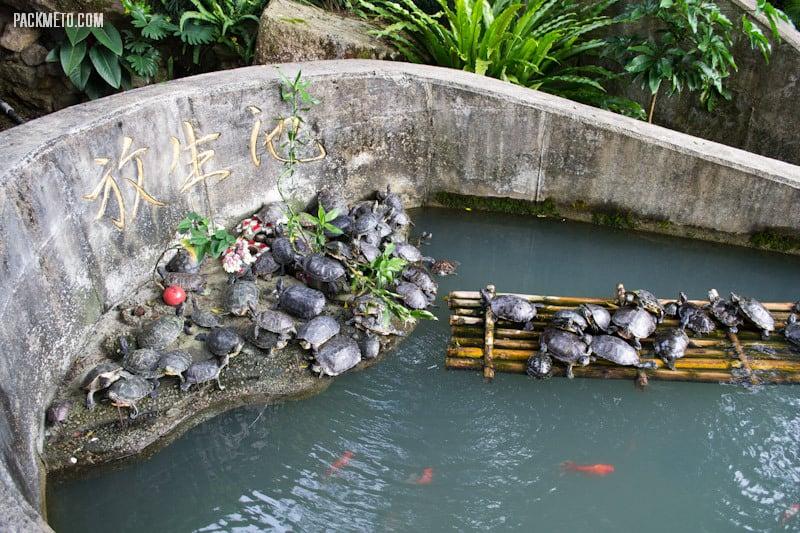 Turtles - Ten Thousand Buddhas Monastery Hong Kong | packmeto.com