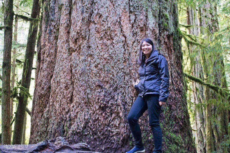 Cathedral Grove Biggest Douglas Fir