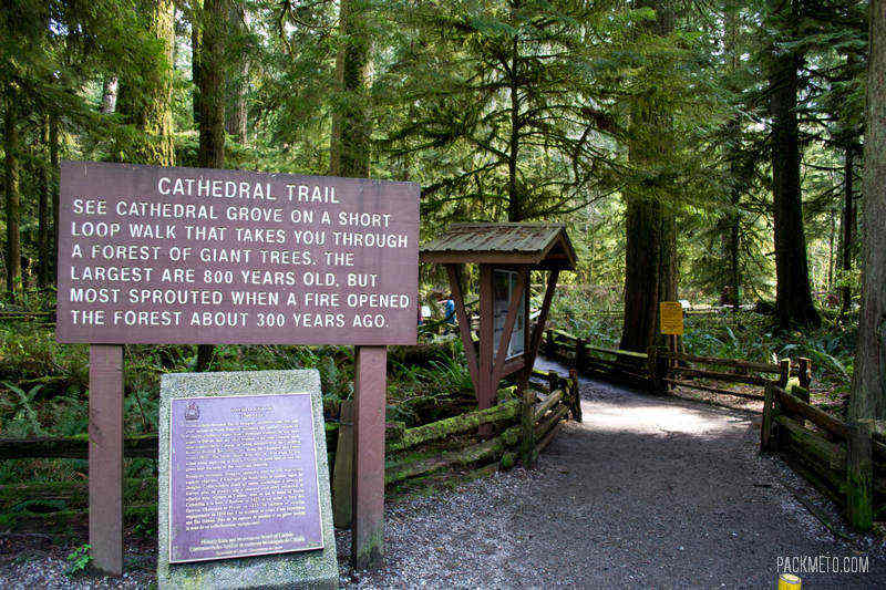 Cathedral Grove Entrance
