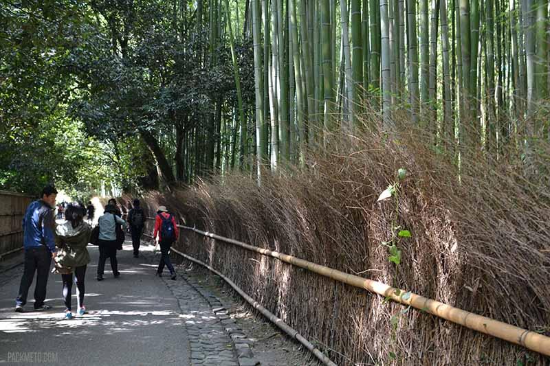 Bamboo forest Arashiyama Kyoto | @packmeto