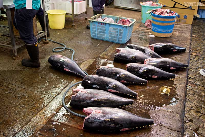 Tsukiji Fish Market Tuna | packmeto.com