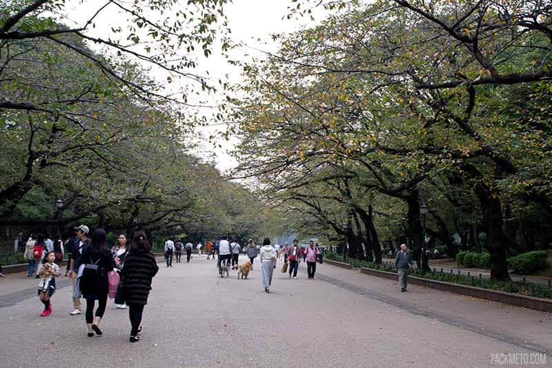 Walking around Ueno Park | @packmeto
