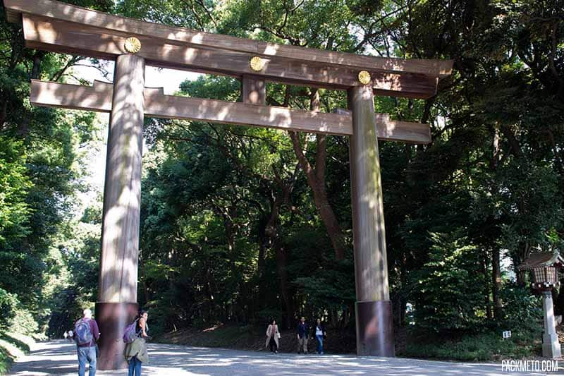 Inside Yoyogi Park: Tranquility in the Heart of Tokyo