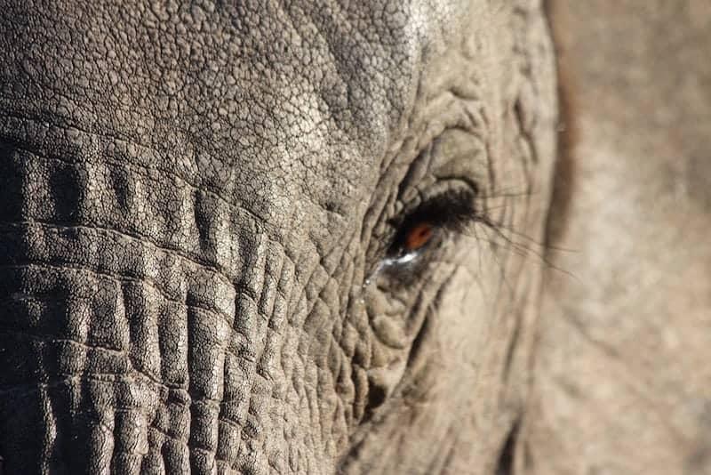 ALuxuryTravelBlog-ElephantShamwariGameReserve