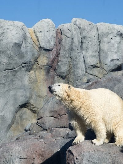 Take a Journey to Churchill at the Assiniboine Park Zoo