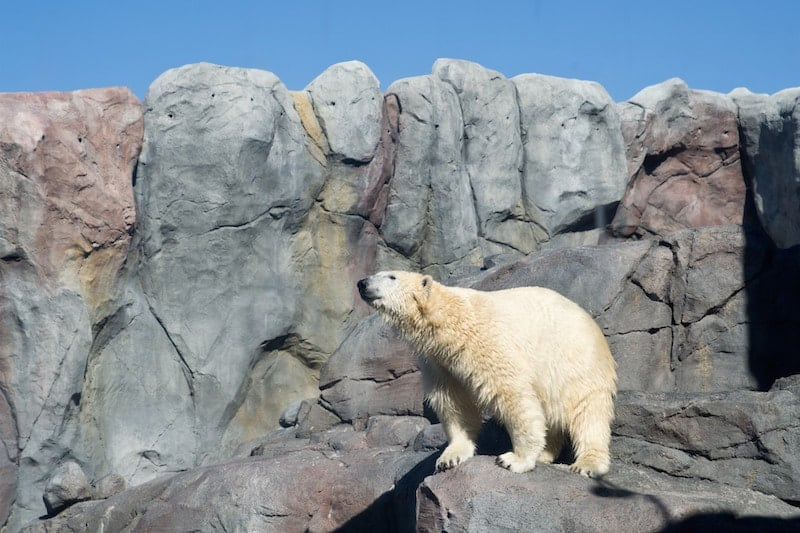 The Journey to Churchill exhibit, Assiniboine Zoo, Winnipeg, Manitoba | packmeto.com