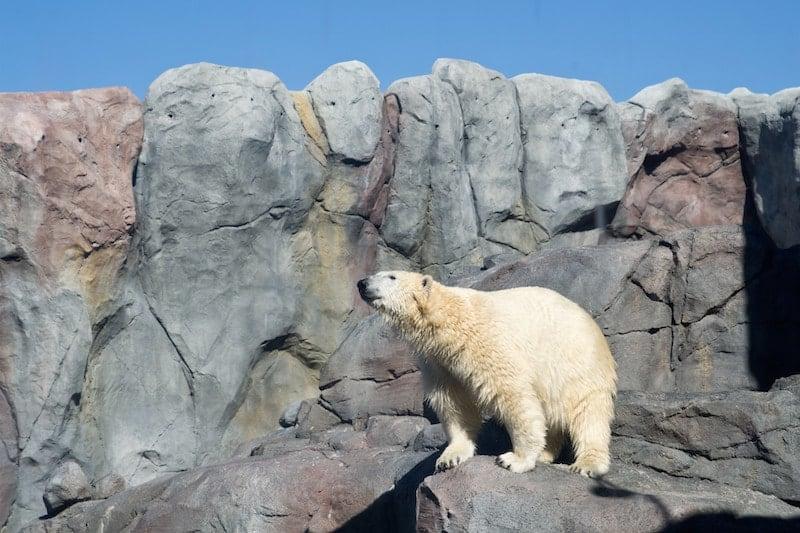 The Journey to Churchill exhibit, Assiniboine Zoo, Winnipeg, Manitoba | packmeto.com
